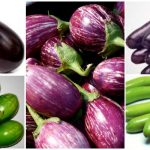 Brinjal Recipes - From India And The World
